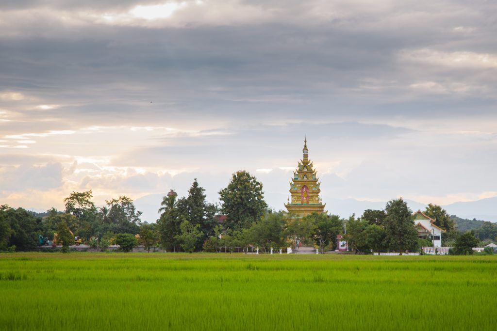 17.Chiang Rai beautiful rice fields and temples